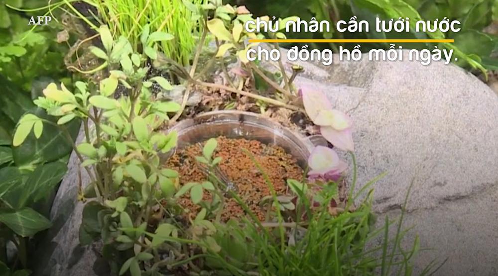 Tưới nước hàng ngày để hoa luôn tươi tốt